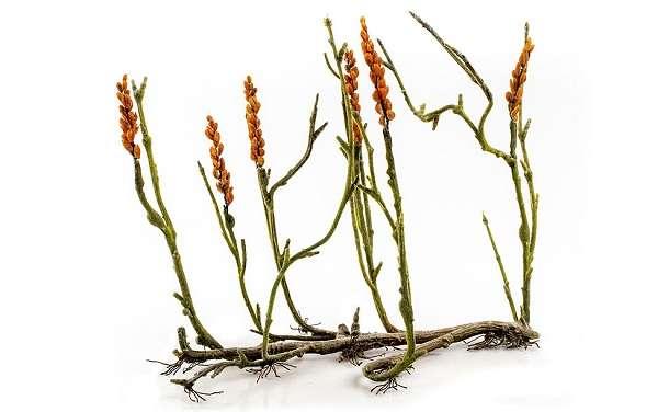 Высшие растения определение, характеристика и признаки