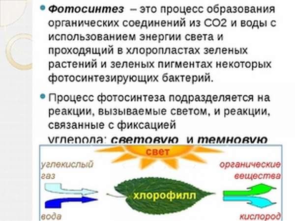 Как протекает фотосинтез в биологии