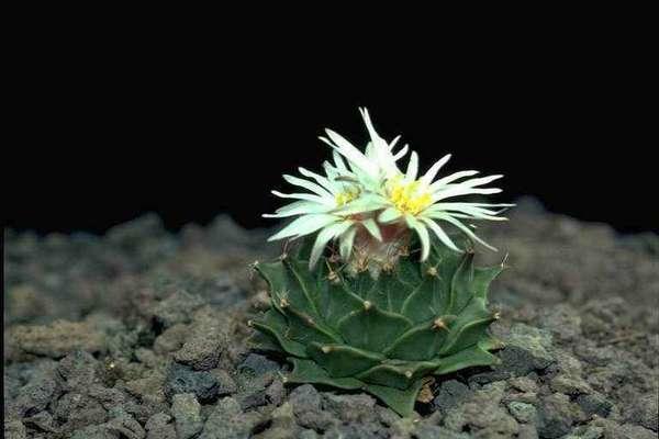 растения северной америки (главный ключ)