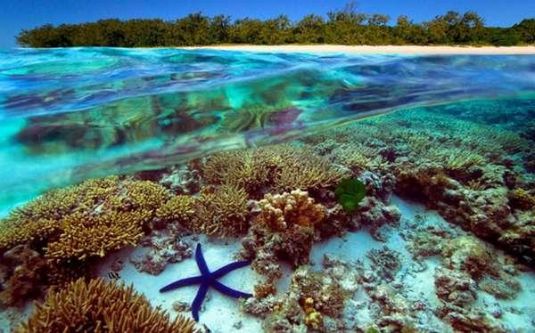 Большой Барьерный риф-курорт Австралии. | Ofir Tours