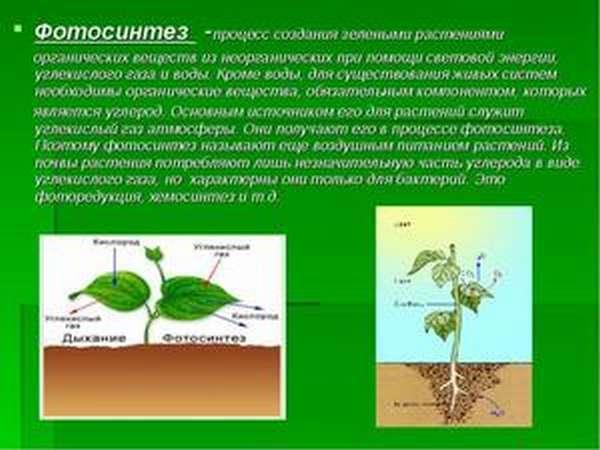 Фотосинтез в природе