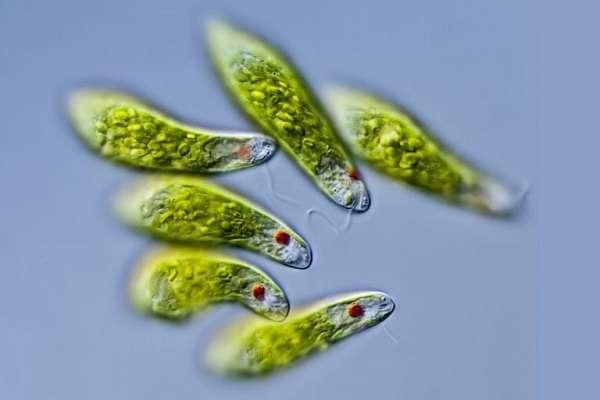 Автотрофы в биологии определение и примеры автотрофных организмов