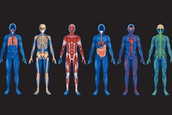 Основные системы организма человека