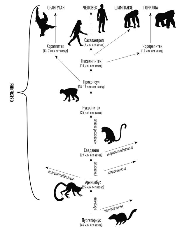 версии происхождения человека