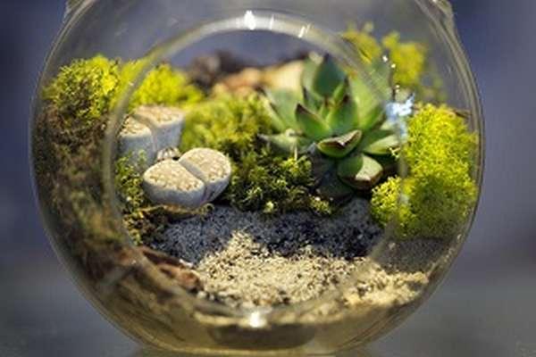 Экосистема определение, типы и виды, структура и состав