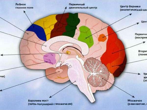 Основной центр мозга
