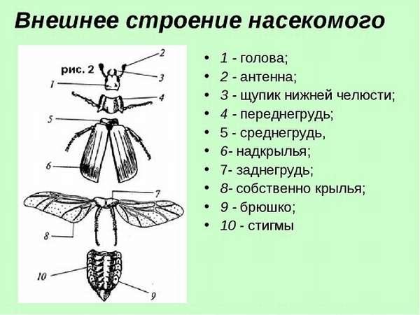 Насекомые виды и названия, общая характеристика класса
