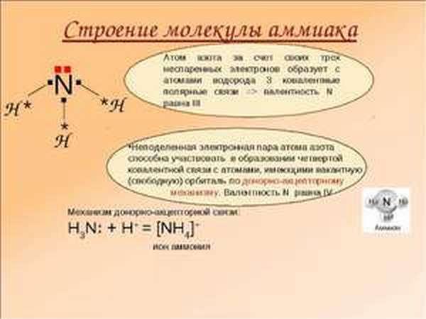 Биологическая роль аммиака Аммиак является конечным продуктом азотистого обмена в организме