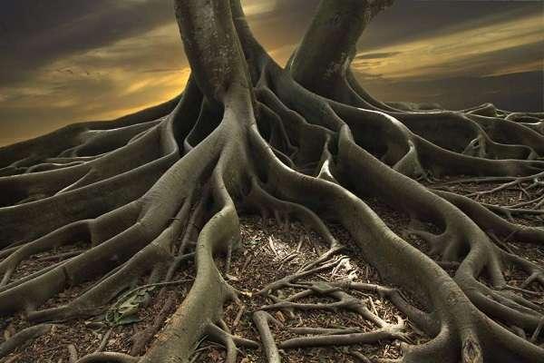 Строение корня растения зоны корня и их функции