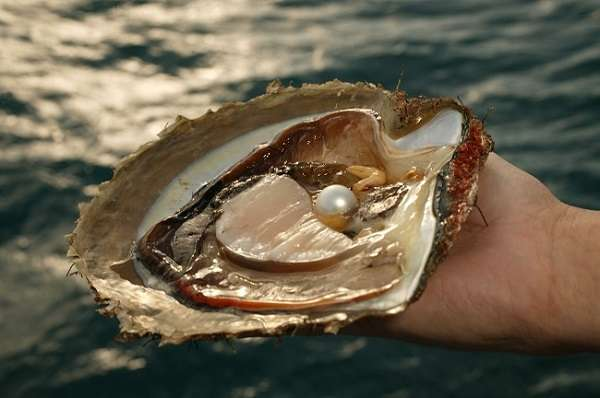 Моллюски виды, значение, характеристика типа