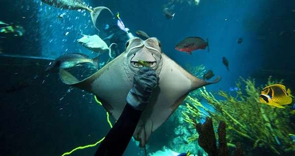 с аквалангистом