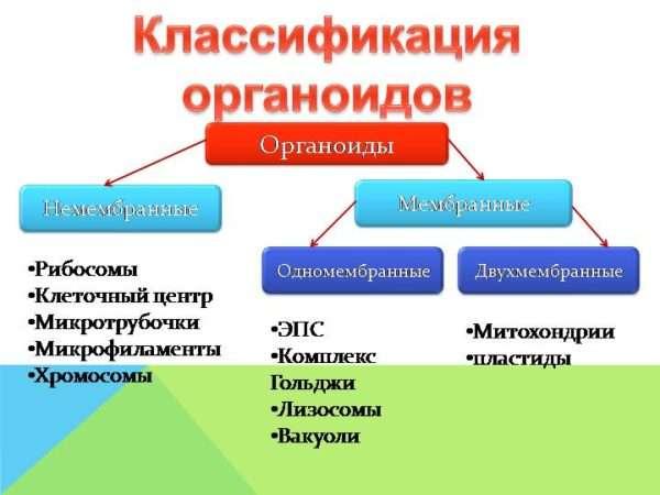 Классификация амеб