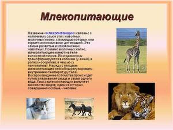 Млекопитающие. Внешнее строение