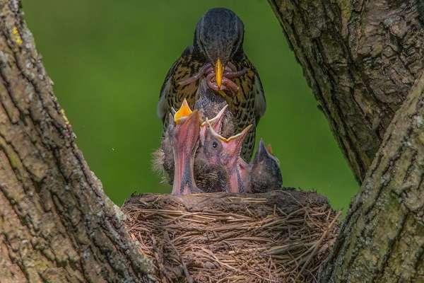 Класс птицы общая характеристика