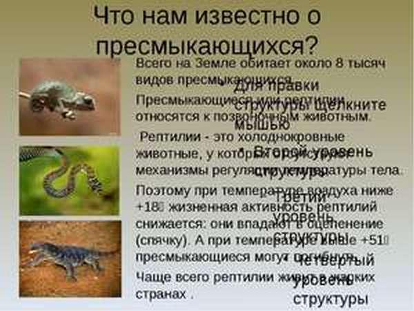 Особенности размножения пресмыкающихся