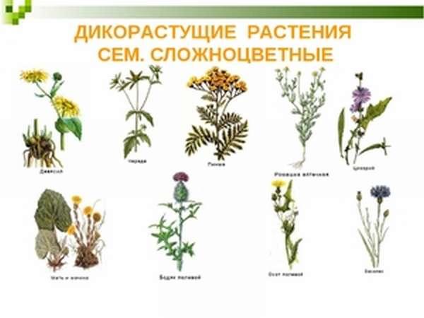 Применение различных трав
