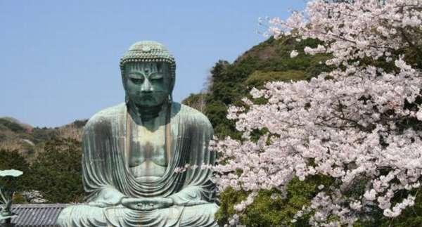 статуя и сакура