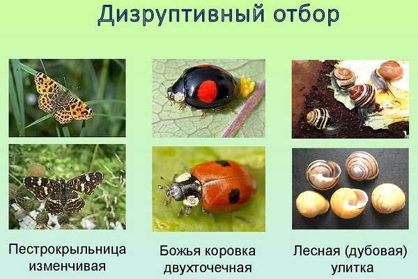 Формы естественного отбора таблица по биологии