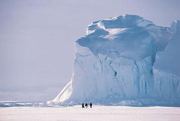 Зона арктических пустынь. Видеоурок. Окружающий мир 4 Класс