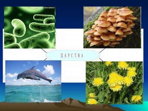 Какова роль биологии в современном обществе