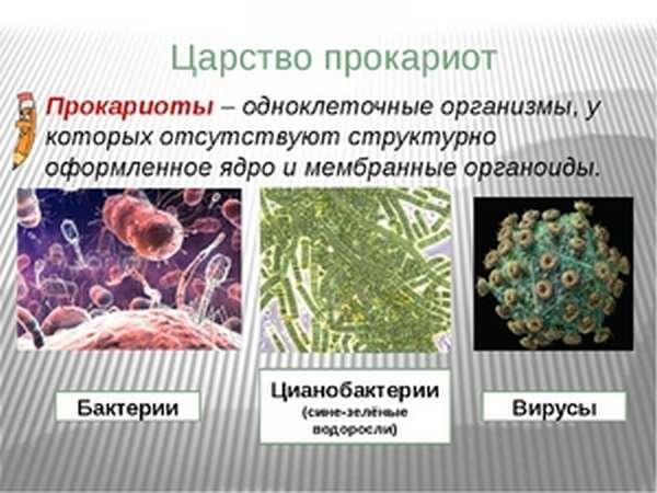 Одноклеточные прокариоты