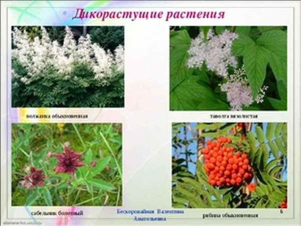 Растения, которые никто не сажает