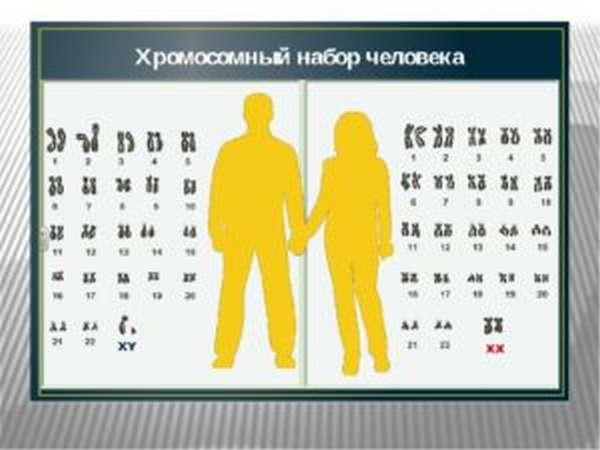 сколько хромосом у людей
