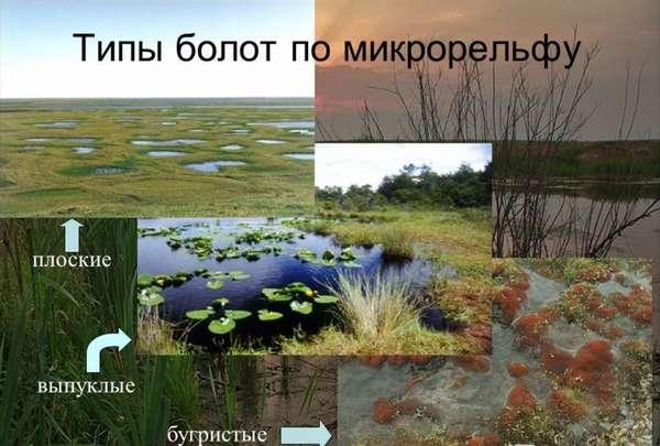 Презентация на тему: БОЛОТА – переувлажненный участок земной ...