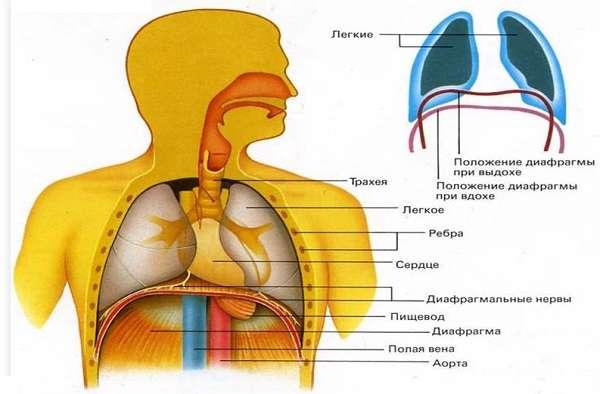 Дыхательный объем норма, частота и глубина дыхания, как и в чем измеряется