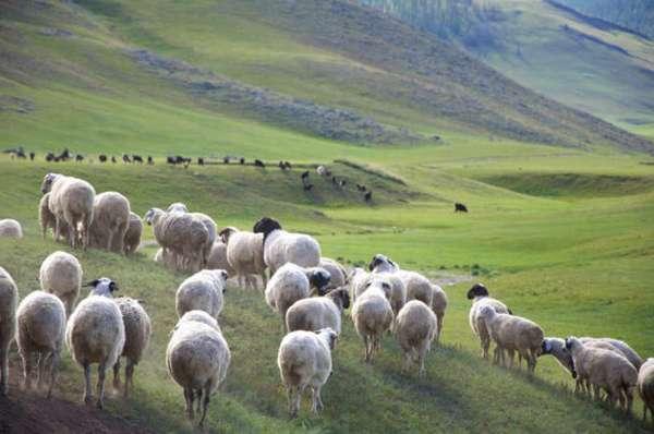 монгольская степь