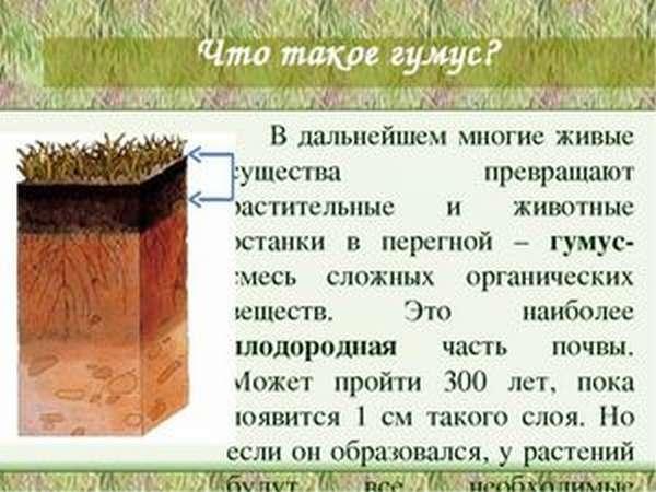 Состав гумуса