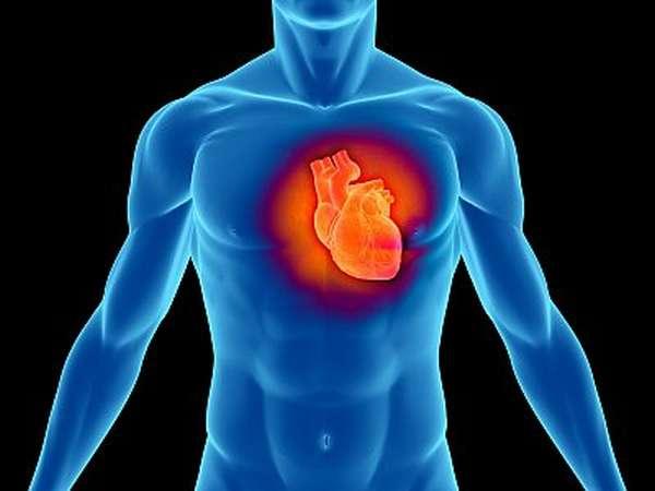 Расположение сердца в грудной клетке у человека