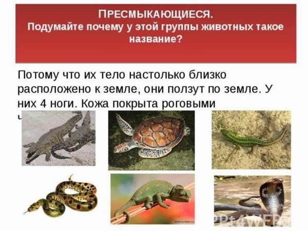 Список пресмыкающихся животных