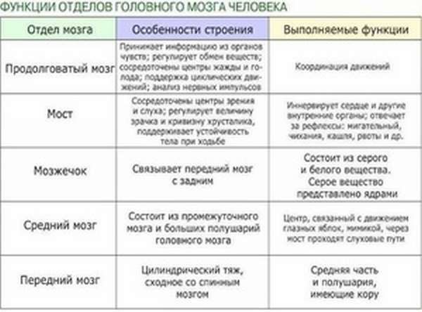 Таблица отделов мозга
