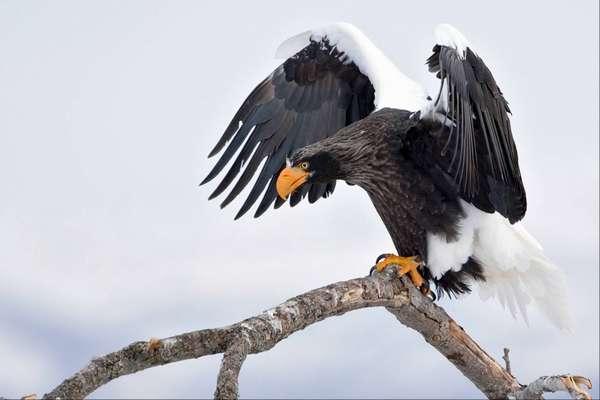 Птицы Камчатки Фото