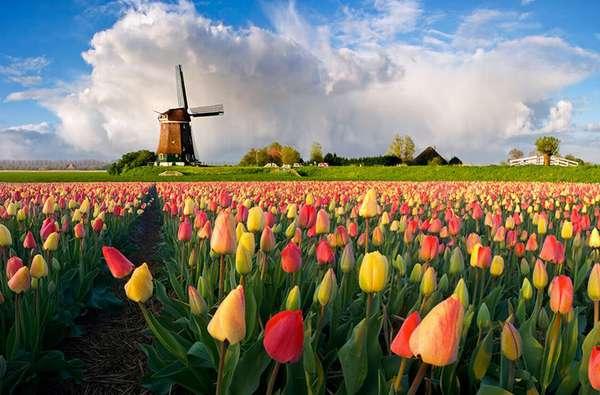 Почему Нидерланды называют Голландией? / Моя Планета