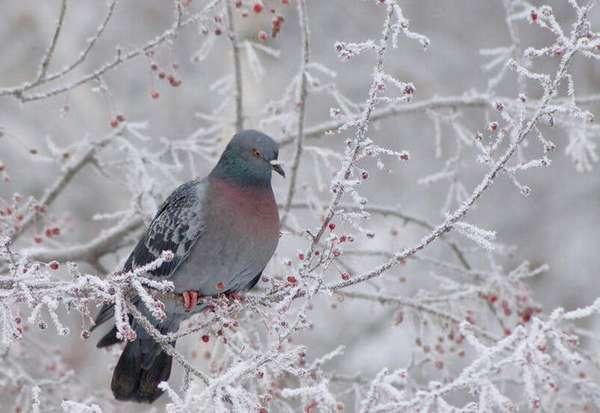 Не забудьте покормить голубей. Сайт Центра правовой зоозащиты.