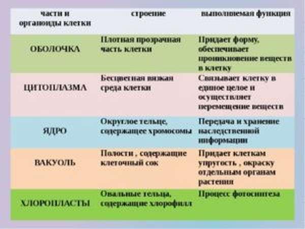 органоиды клетки их строение и функции таблица