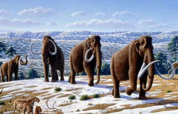 Вскоре на Земле снова появятся мамонты : Наука : ВладТайм