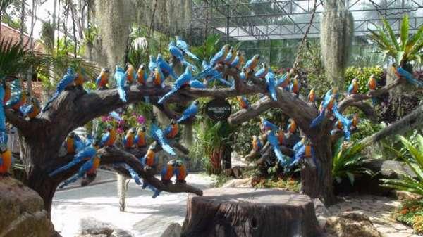 птицы в парке
