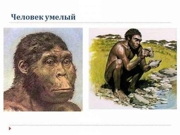Как мы произошли от обезьяны: теория Дарвина о происхождении человека