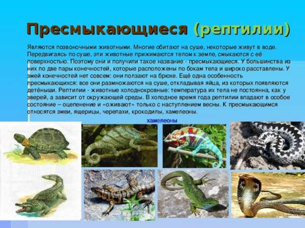 Образ жизни змеи и варанов