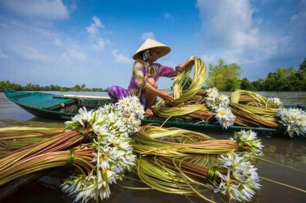 девушка собирает водяные лилии