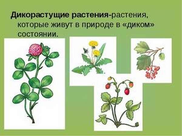 Какие растения растут сами по себе