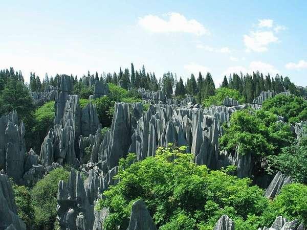 Каменный лес: Россия, Китай, Болгария, Мадагаскар