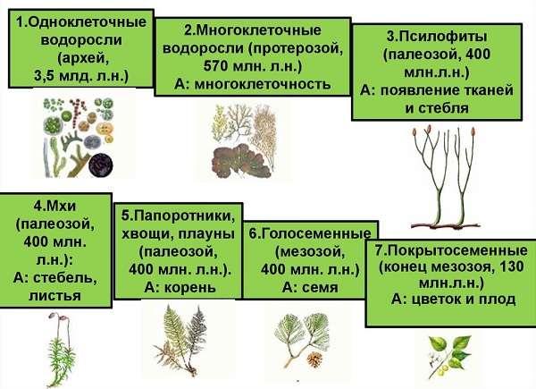 Водоросли виды и названия, значение