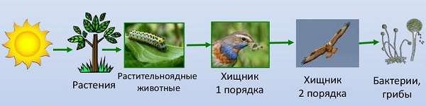 Растительноядные животные список с примерами и названиями