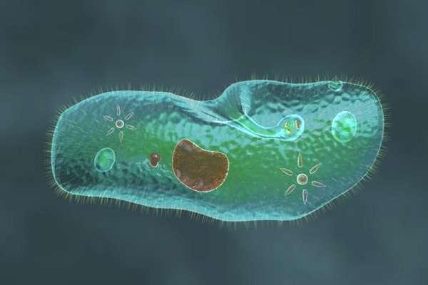 Одноклеточные организмы список с названиями и примерами