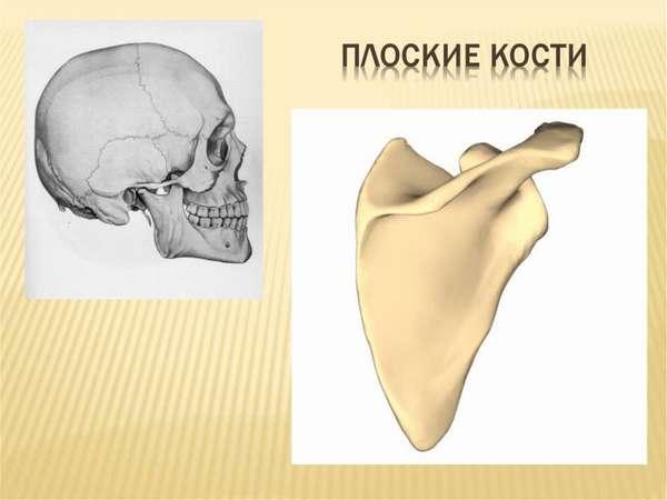 Скелет человека - online presentation