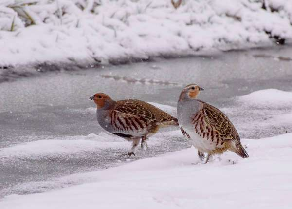 какие птицы улетают на юг